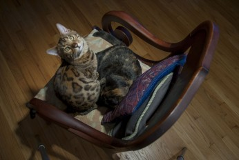 Cvj and Ebee in my chair